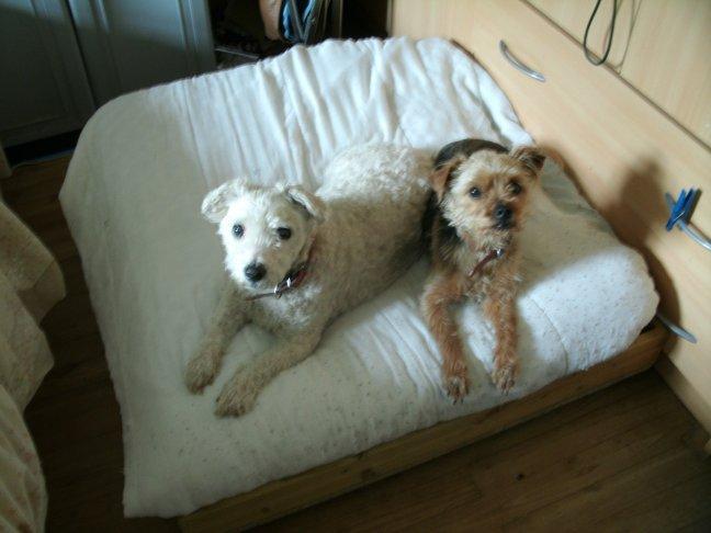 Mes chiens, Nougat et Biscotte - Page 2 0r0x2