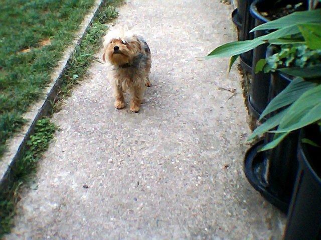 Mes chiens, Nougat et Biscotte 2OdR9