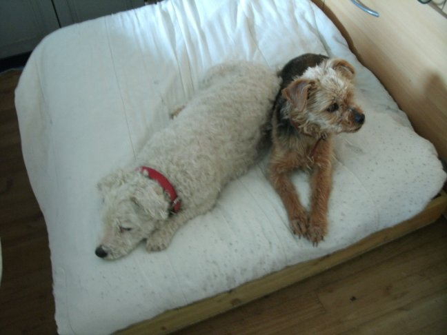 Mes chiens, Nougat et Biscotte - Page 2 3O9Yb