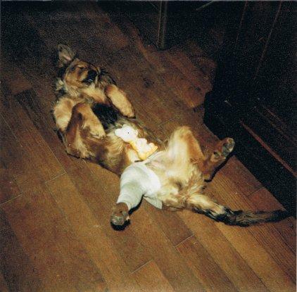Mon chien Voyou 4qN1O