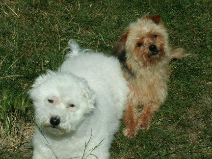 Mes chiens, Nougat et Biscotte - Page 2 4qZVv
