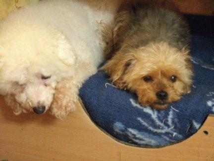 Mes chiens, Nougat et Biscotte - Page 2 5Rw7g