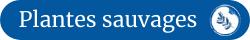 Logo cueillette de plantes sauvages