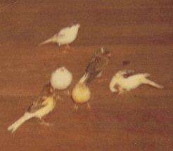 Mes oiseaux 7Wkql