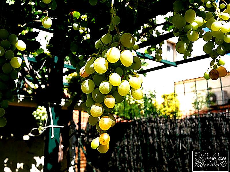 le raisin du jardin 5d9pX