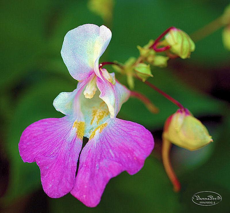 Fleurs du Jardin 5dEAX