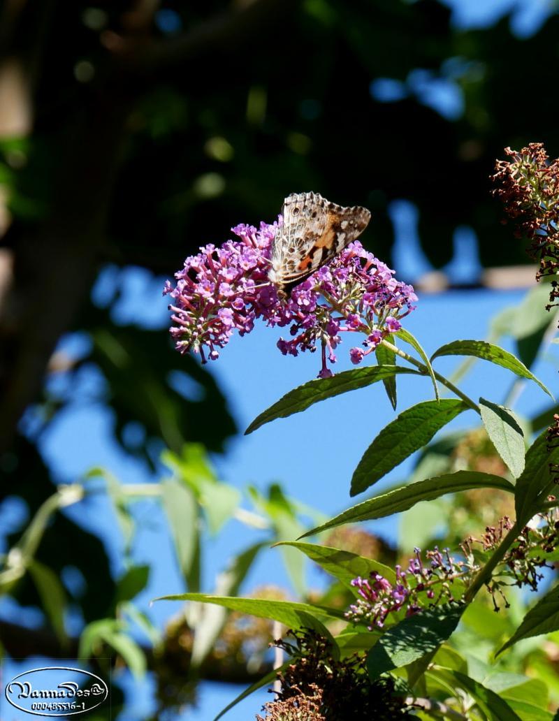 Quelques fleurs du jardin 84qab