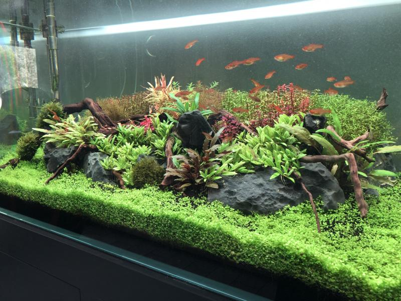 Aquascaping 180L éclairage wrgb II - Page 2 9XrZw