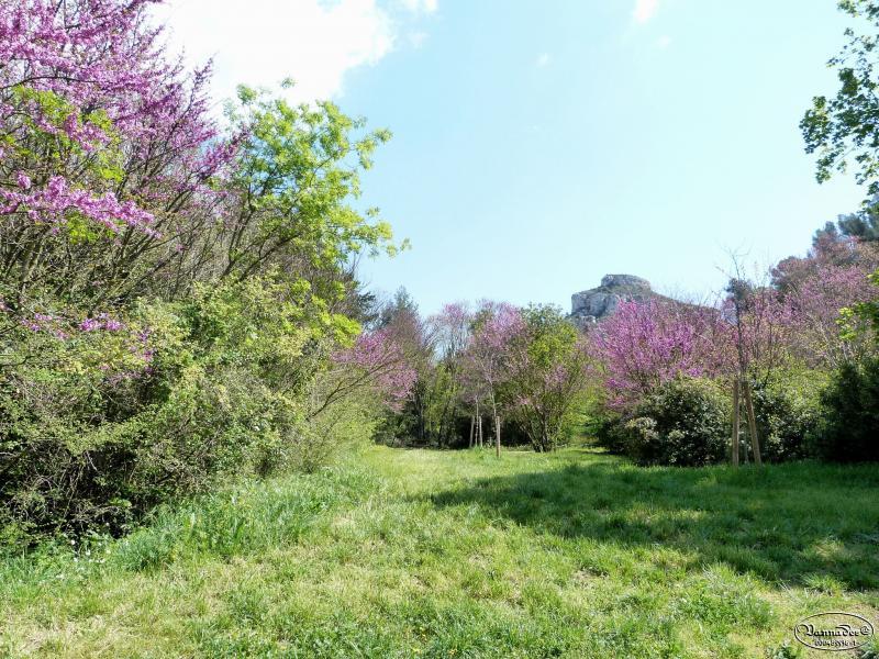 "La Vallée de St Pons ( Gémenos ) ""la Vallée Rose"" DynE2"