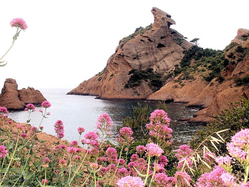 Calanque de Figuerolles (Un petit coin de Paradis)  Ej0l5