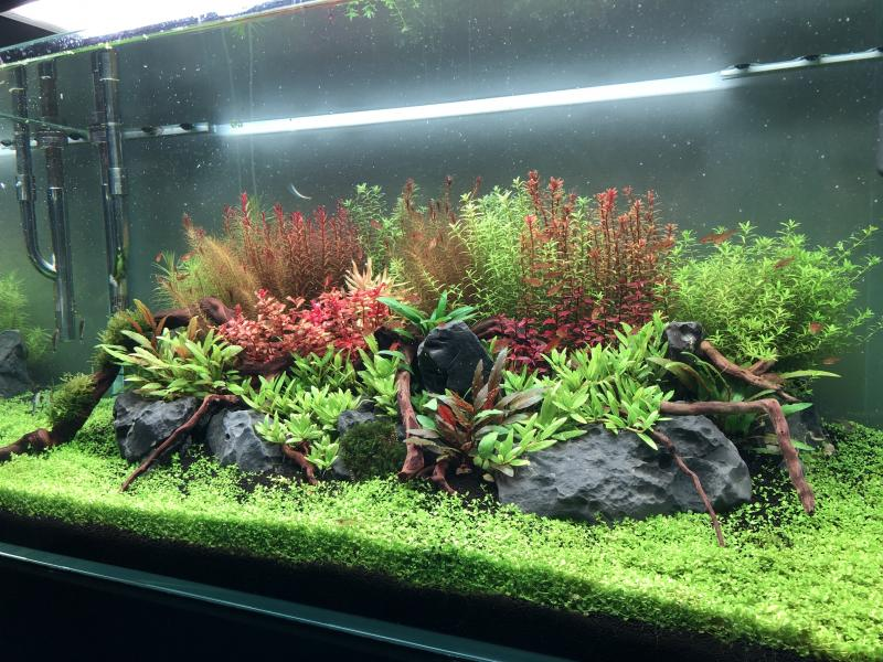 Aquascaping 180L éclairage wrgb II - Page 2 GY9P1