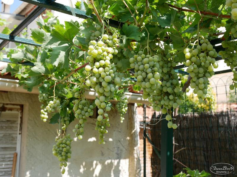 Légumes et fruits  du Jardin - Page 2 L9XJp