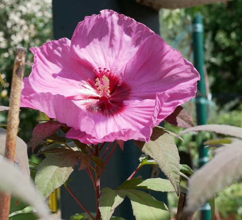 Quelques fleurs du jardin NeQwW