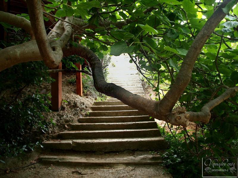 Calanque de Figuerolles (Un petit coin de Paradis)  Nelp7