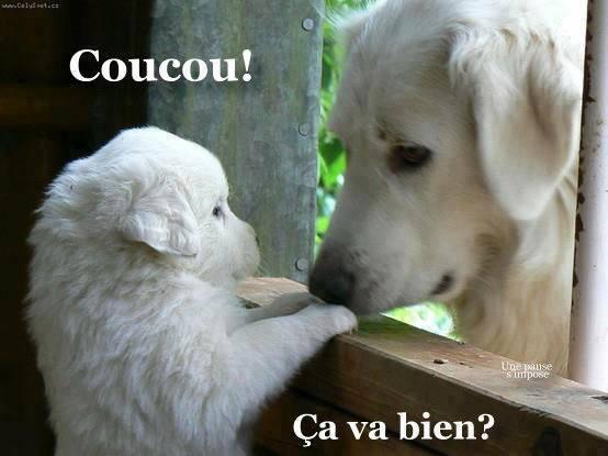 Bonjour, bonsoir..... - Page 19 ARL9e