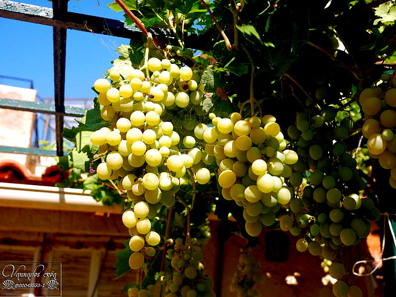 le raisin du jardin RWLrv