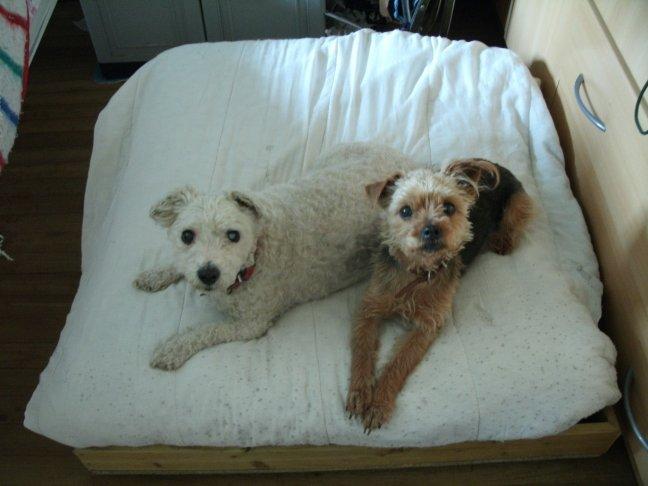 Mes chiens, Nougat et Biscotte - Page 2 8pd7W