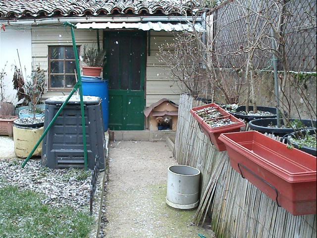 Mes chiens, Nougat et Biscotte - Page 2 Dn47E