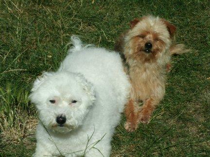 Mes chiens, Nougat et Biscotte - Page 2 E92X5
