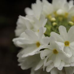 Fleur blanche du Jardin