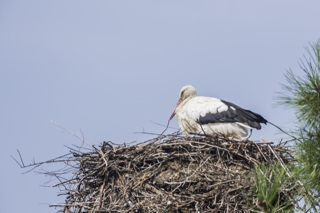 Sortie à la réserve ornithologique du Teich - 24 août 2018 J0DEo