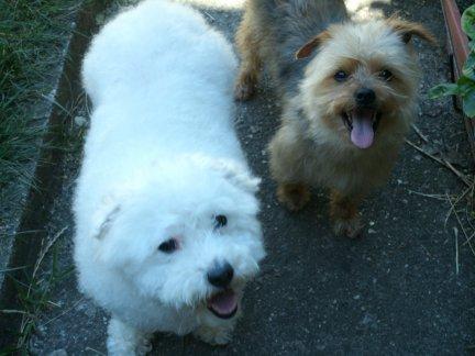 Mes chiens, Nougat et Biscotte - Page 2 Jde4a