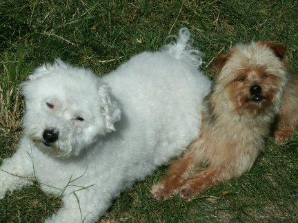 Mes chiens, Nougat et Biscotte - Page 2 KNE2Y