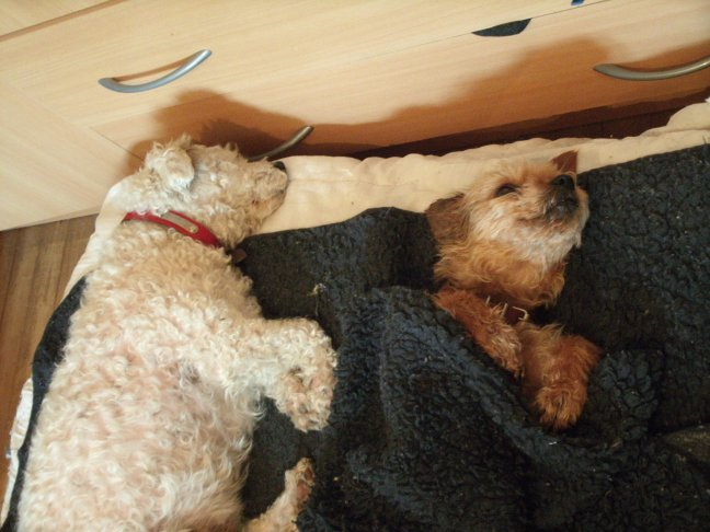 Mes chiens, Nougat et Biscotte - Page 2 KNEd3