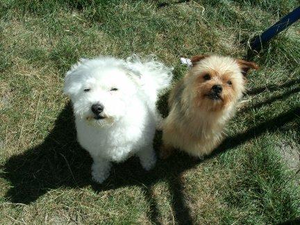 Mes chiens, Nougat et Biscotte - Page 2 KNEpY