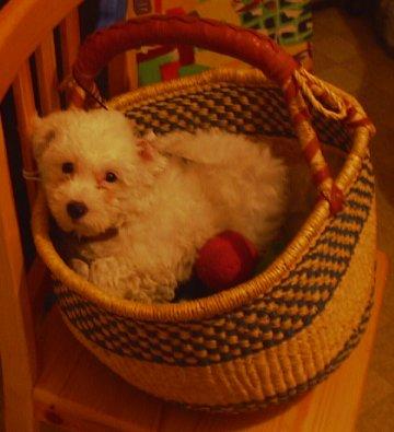 Mes chiens, Nougat et Biscotte - Page 2 N2DlG
