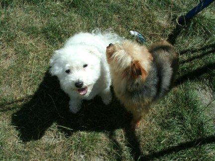 Mes chiens, Nougat et Biscotte - Page 2 Oo9AQ