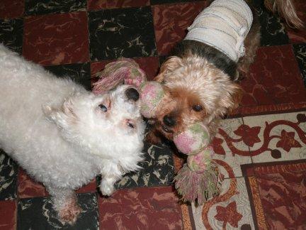 Mes chiens, Nougat et Biscotte Pkpb4