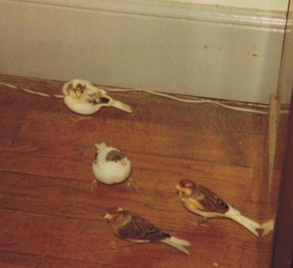 Mes oiseaux QVedN