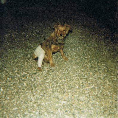 Mon chien Voyou QVevN