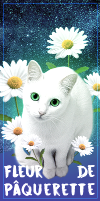 Fleur de Pâquerette
