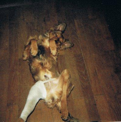 Mon chien Voyou Raojm