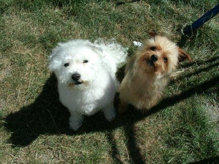 Mes chiens, Nougat et Biscotte - Page 2 Wep9w
