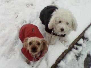 Mes chiens, Nougat et Biscotte - Page 2 WepX3
