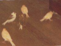 Mes oiseaux XX2Rq