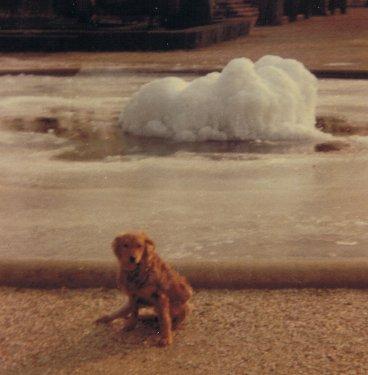 Mon chien Voyou XX2jb