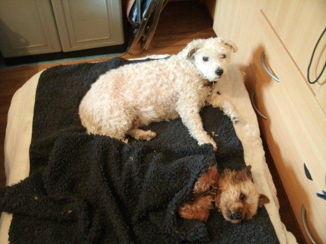 Mes chiens, Nougat et Biscotte - Page 2 XXD7g