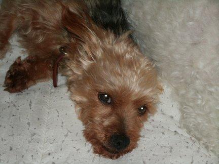 Mes chiens, Nougat et Biscotte XXDWd