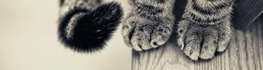 Création du Chat