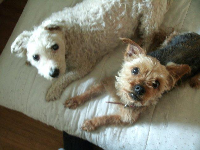 Mes chiens, Nougat et Biscotte - Page 2 ZdplG