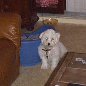 Mes chiens, Nougat et Biscotte - Page 2 Zdpwq