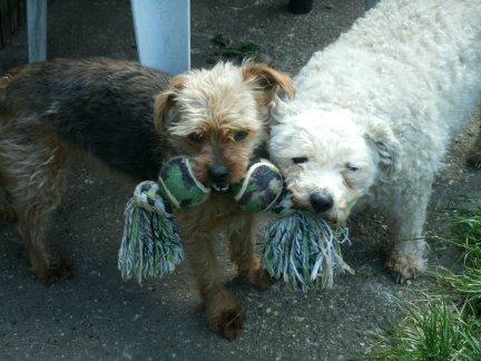 Mes chiens, Nougat et Biscotte Ab4Wk