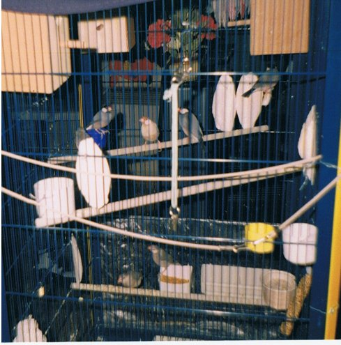 Mes oiseaux Db7Oy