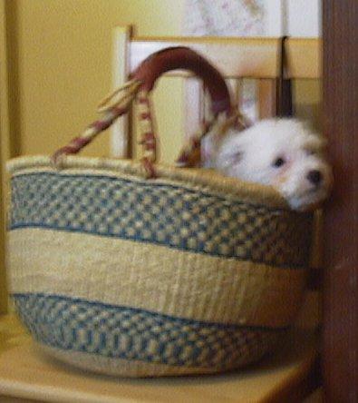 Mes chiens, Nougat et Biscotte - Page 2 Dbvx3