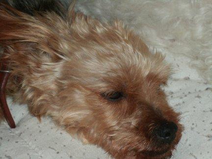 Mes chiens, Nougat et Biscotte EbRW9