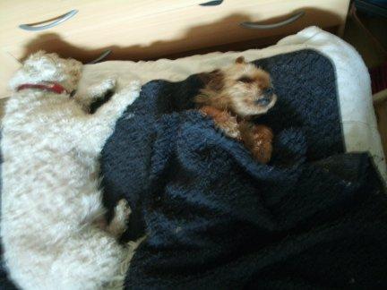 Mes chiens, Nougat et Biscotte - Page 2 EbRdj